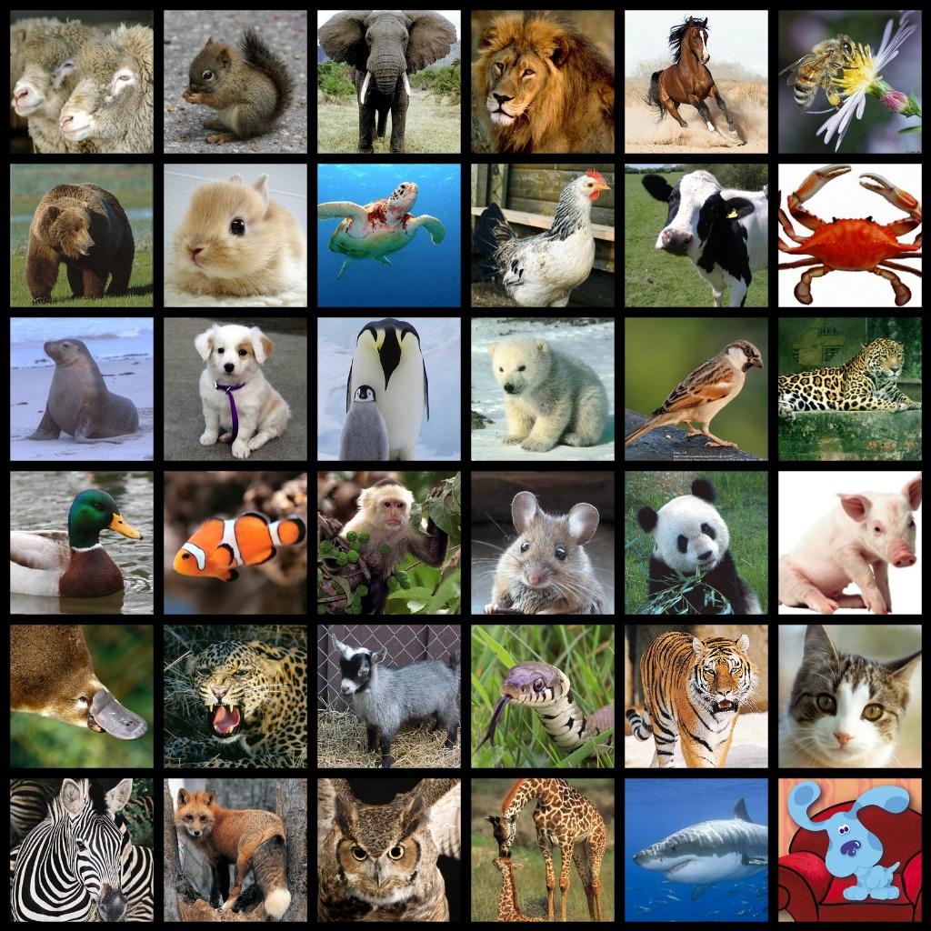 http://www.notquitesusie.com/wp-content/uploads/2011/04/shanes-animals-collage.jpg