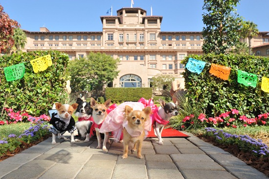 Beverly Hills Chihuahua 3: Viva La Fiesta Activity Sheets!