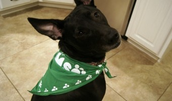 Making a Puppy Part of the Family {$50 Gift Card Giveaway!}