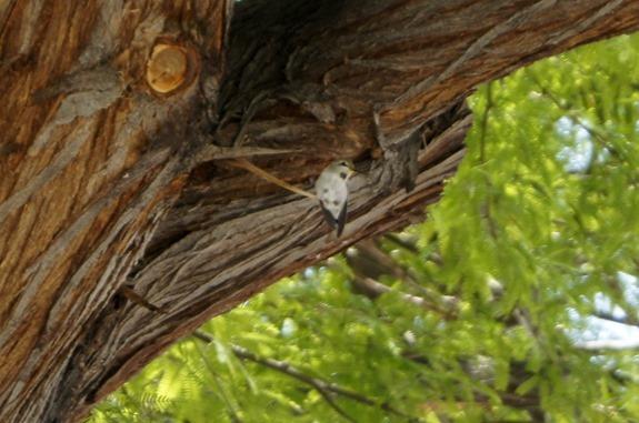 {Not Quite} Wordless Wednesday: Hummingbird