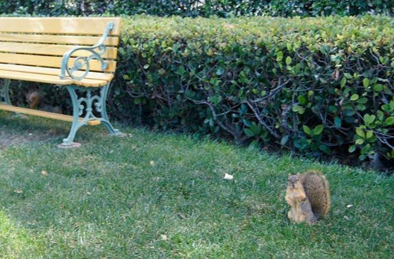 Squirrel at DisneyMoviesEvent