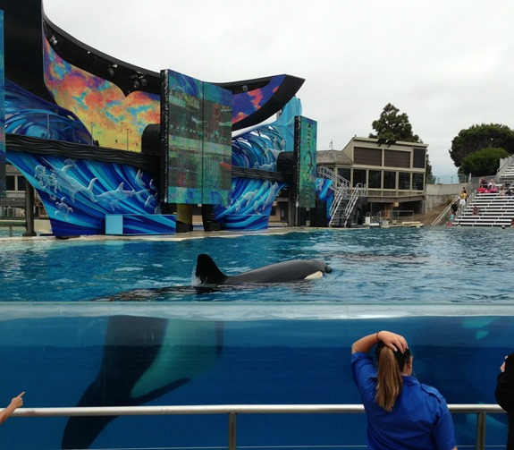 Seaworld San Diego- One Ocean