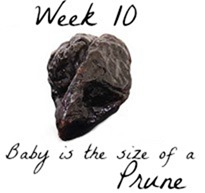 Week 10 pregnancy baby size comparison