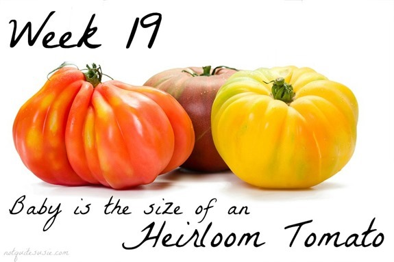 Heirloom Tomato 19 Week Baby Size Comparison