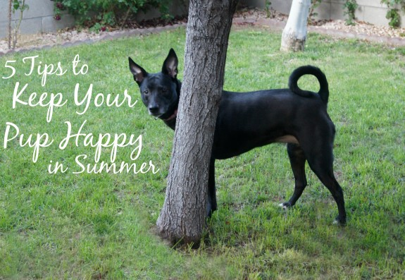5 Tips to Keep Your Pup Happy in Summer
