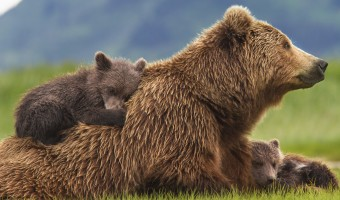 Bears Now Available on Blu-ray! {Prize Pack Giveaway!}