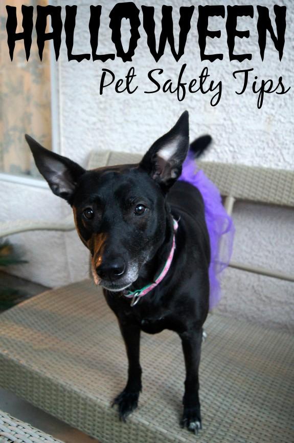 Halloween Pet Safety Tips #TrickOrTreatEm #shop