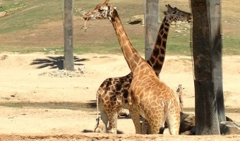 Learning Through Play: A Trip to the Zoo