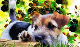 Tips for Ordering a Personalized Pet Portrait