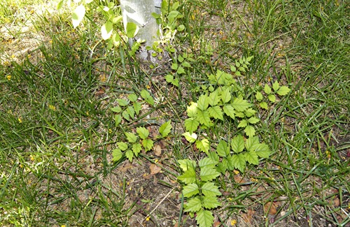 Curb Appeal Tips Kill all the weeds!