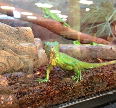 lizard pet store