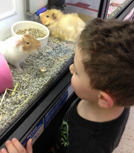 toddler pet store 4