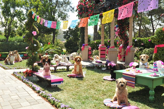 BEVERLY HILLS CHIHUAHUA 3  Scene 108 They await the guests of honor.