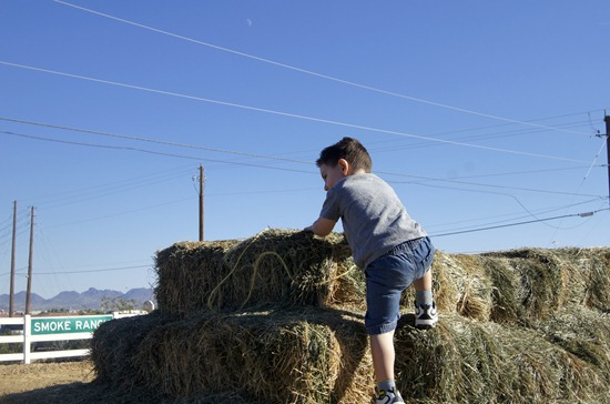 climbing the hay stack