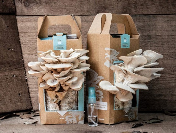 back to the roots mushroom kits