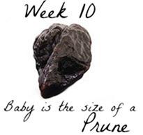 Week 10 pregnancy baby size comparison