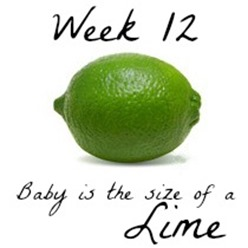 Week 11 Baby Size Comparison