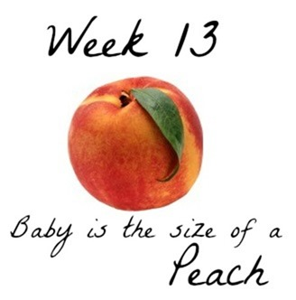 Week 13 Baby Size Comparison Fetal Growth