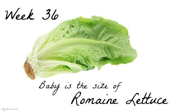 Week 36 Baby Size Comparison