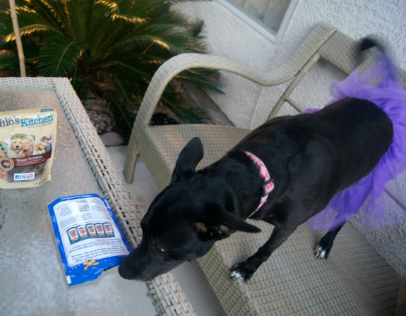 Bella inspecting her Canine Carry Outs #TrickOrTreatEm #shop