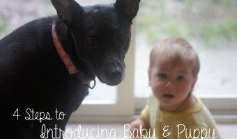 4 Steps to Introducing Baby and Puppy