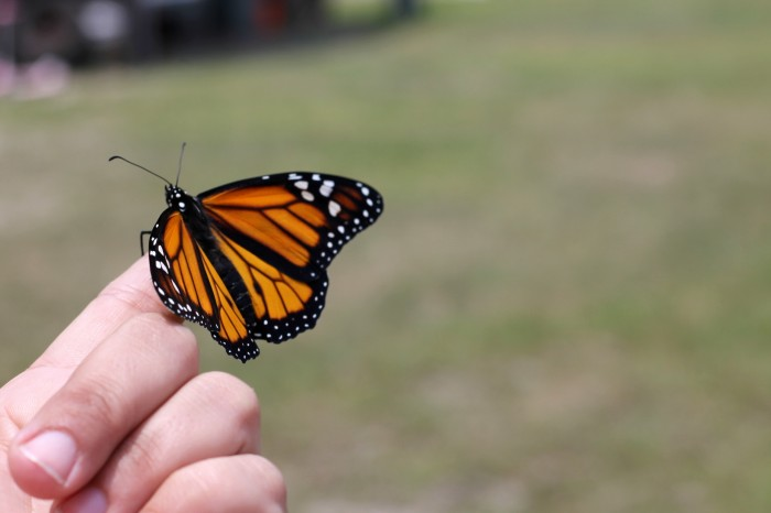 Learn about butterflies this summer! Find more fun backyard activities in this post!