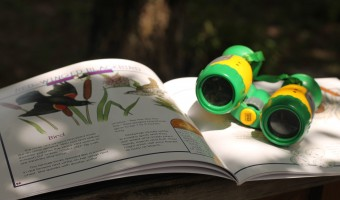 Learning Through Play: Backyard Explorers Activity Ideas