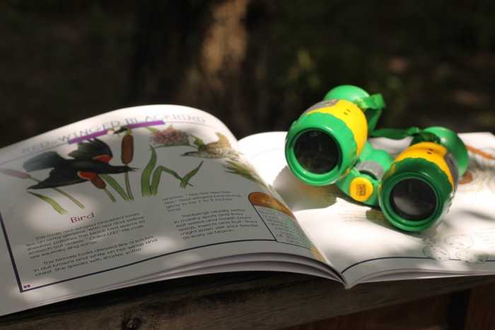 Look for bugs or birds in your own backyard this summer! Find more fun backyard activities in this post!
