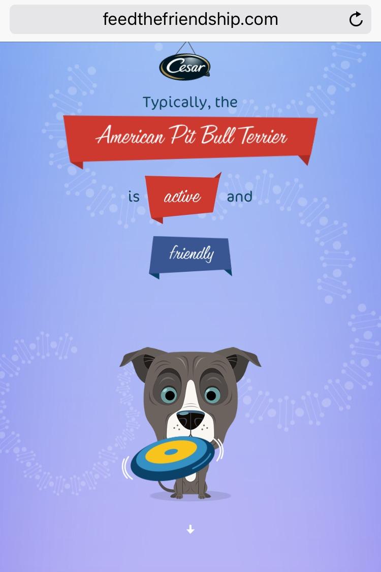 Feed the Friendship dog traits