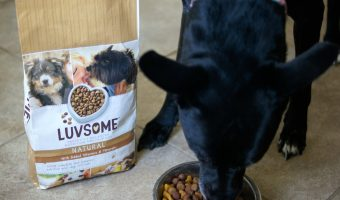 Sharing the Love with Luvsome Dog Food!