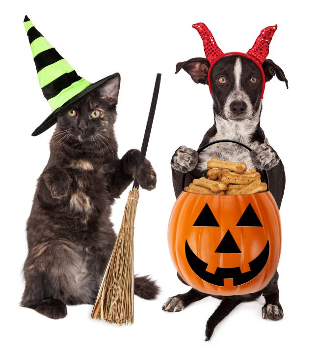 Did you know that it can be easy to DIY your own homemade dog treats? Cat treats, too! This list has recipes for several kinds including better breath treats, healthy treats, grain free treats, frozen treats, no bake treats, and more traditional treats made of pumpkin, peanut butter, and more.