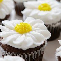 Buttercream Daisy Cupcakes